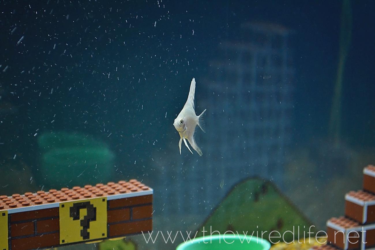 Mario Brothers Aquarium Decorations Heres A Super Mario Bros Aquarium Made Of Lego
