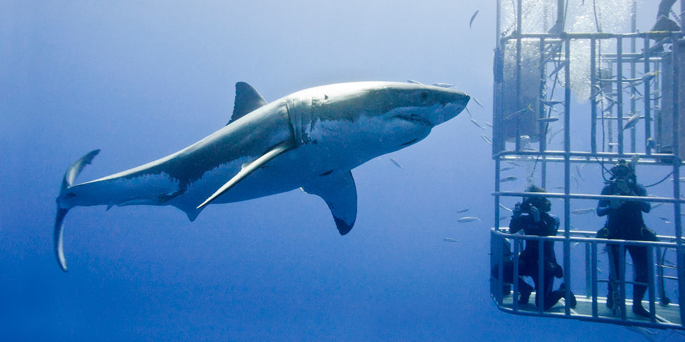 http://pop.h-cdn.co/assets/15/28/980x490/landscape-1436537168-shark-cage-web.jpg