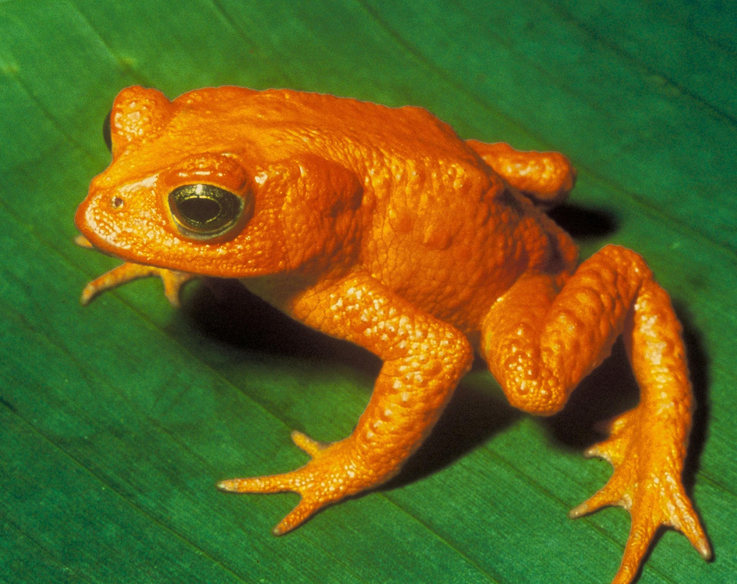 11 extinct animals amp lost species gone forever