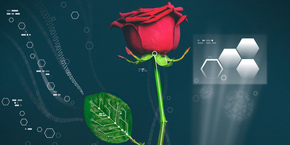 Plants, Electrified: Scientists Just Grew Conductive Wires Inside ...