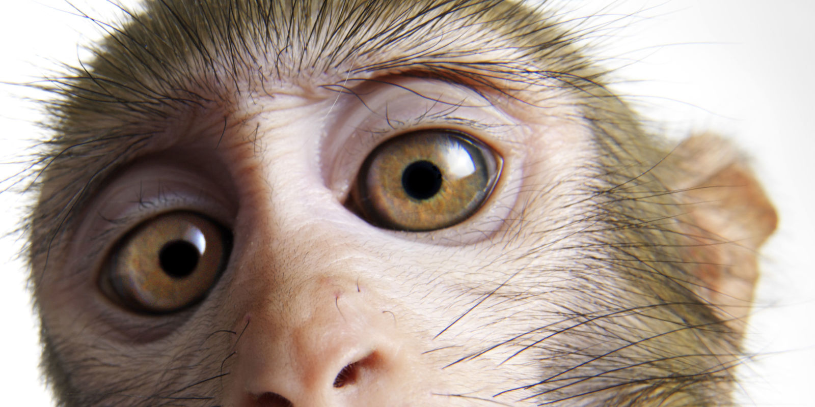 Lab Grown Cells Restore Sight To Blind Monkeys
