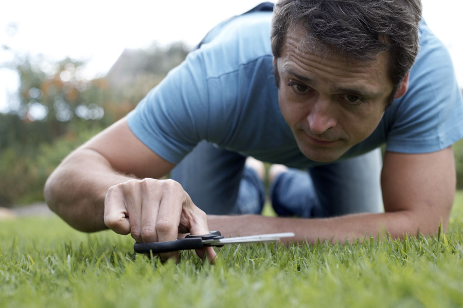 Cutting your lawn too short will thin it out, and it makes your lawn  vulnerable