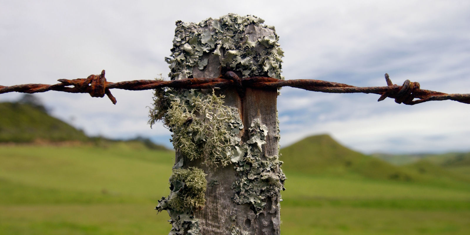 How barbed wire built the west and then bloodied