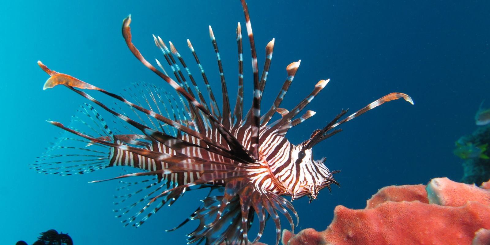 Who Buys Used Cars >> Watch A Guy Shoot Invasive Lionfish With A Glock 9mm