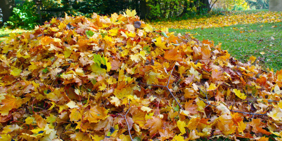 lovely fall lawn care Part - 5: lovely fall lawn care great ideas