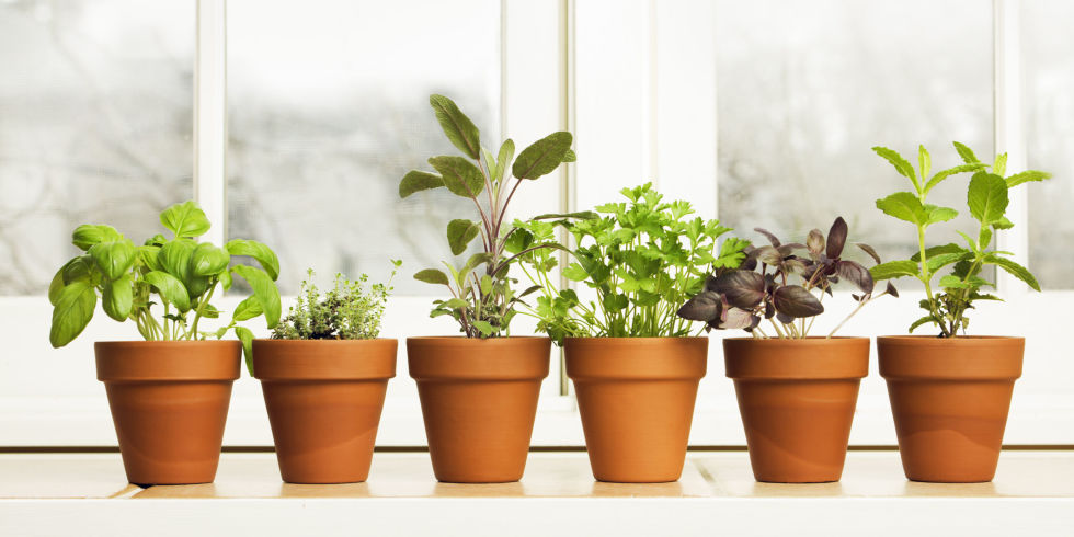 Herb Garden Indoor how to plant an indoor herb garden