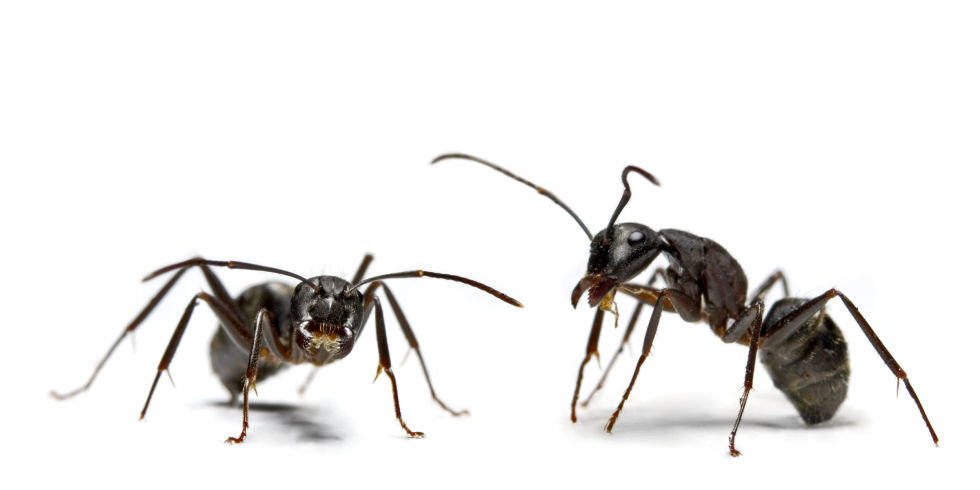 How to Get Rid of Ants | Ants in Kitchen