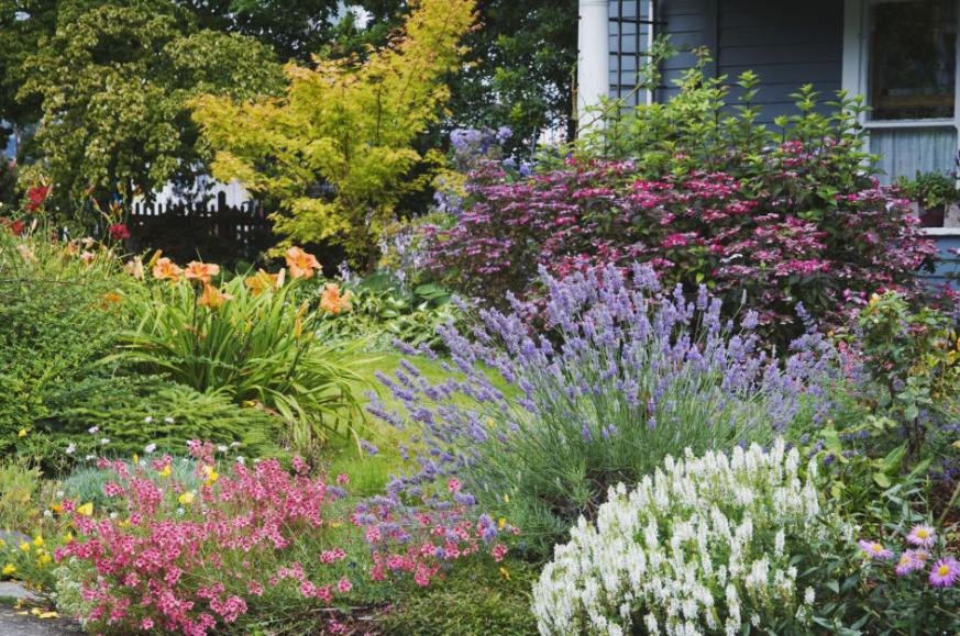 7 plant lavender - Spring Planting Ideas