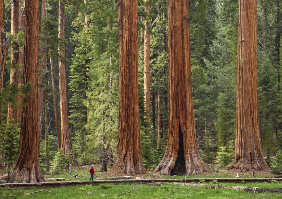 1500054230 sequoianationalpark getty