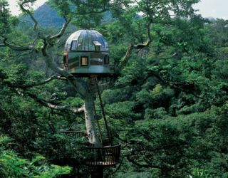 Treehouse tree house pictures - amazing treehouses