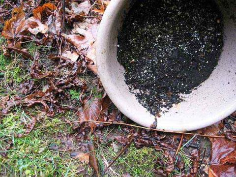 How Get Rid Of Mosquitoes In Your Yard