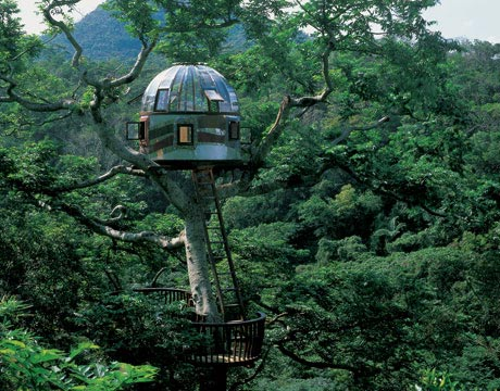 Tree House tree house pictures - amazing treehouses