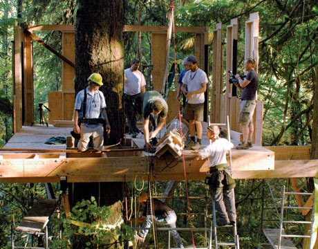 Tree House Pictures Amazing Treehouses
