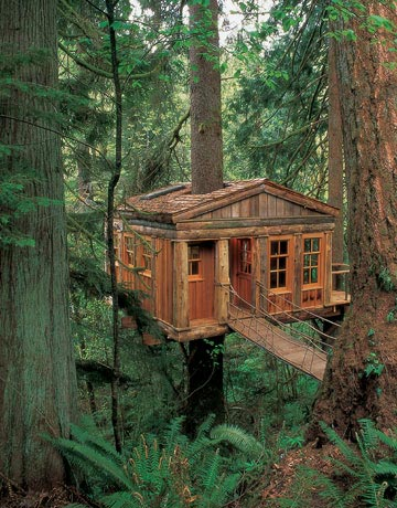 tree house pictures - amazing treehouses