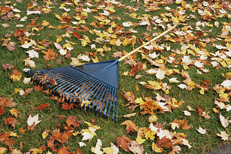 Prepare Lawn For Winter how to plant for fall and prepare your garden for winter
