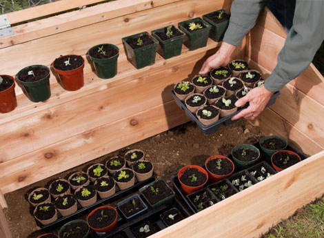 how to build a cold frame for winter gardening with plans