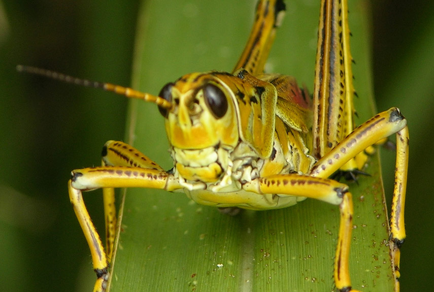 Flying Lotus You Tube File Close Up Of A Dragonfly On A