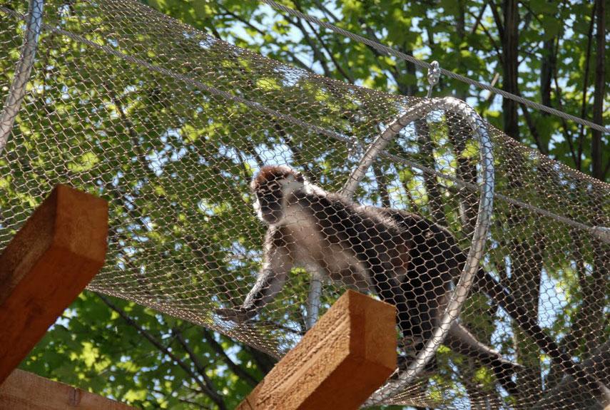 Quot Treetop Trail Quot Lets Philadelphia Zoo Primates Go Exploring