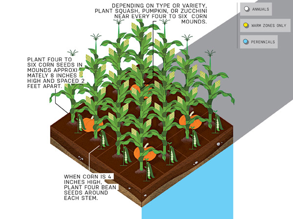 Eat What You Sow How to Start a Vegetable Garden – When Do You Start Planting a Garden
