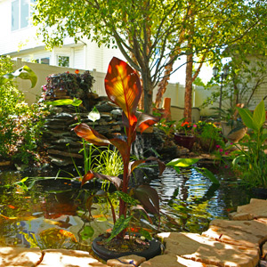 6 Tips For Building A Backyard Oasis