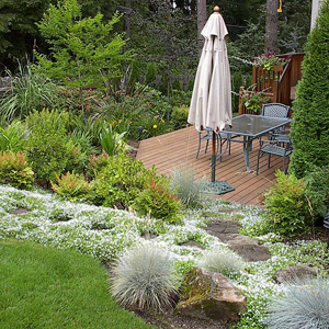 3 ways plants can help you control erosion for Landscaping help