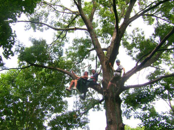 How To Climb Trees With Ropes And Harnesses