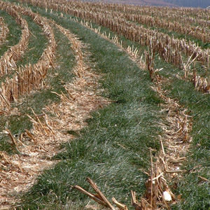Plant cover crops and save your soil for Importance of soil wikipedia