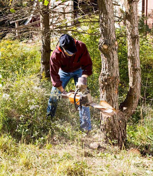 Chainsaw Reviews Best Chainsaws