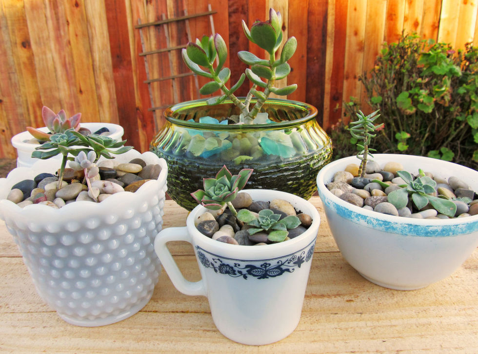 Bring your beautiful bowls into the open by using them to plant succulents, which look great in any kitchen windowsill.
