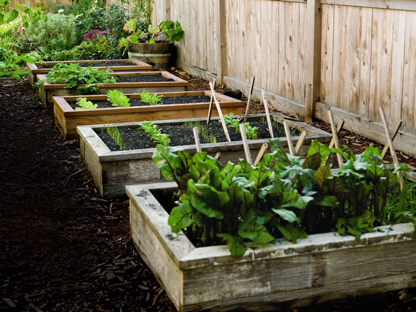 Raised garden beds made from wooden timbers create a growing environment separate from the surrounding soil.